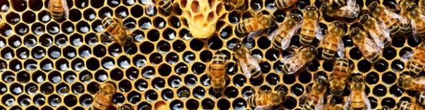 World Honeybee Day