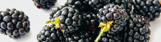 Blackberries – A Delicious Superfood!
