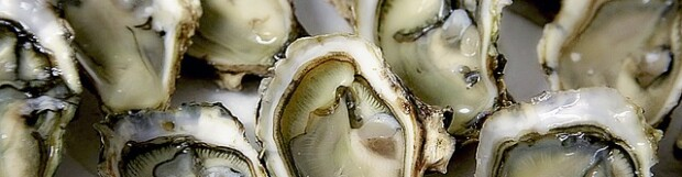 Oysters are a Nutritional Powerhouse!